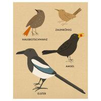 Mein Kleines Vogelbuch | Katrin Wiehle